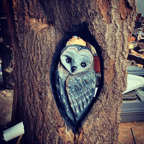 Owl in a Hollow