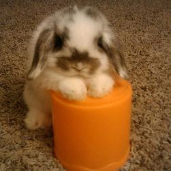 bunnypictureday3.jpg