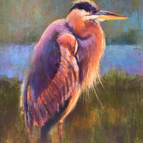 Watchful Heron