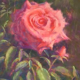 Summer Rose - SOLD