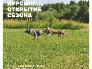 Курсинг в Томске