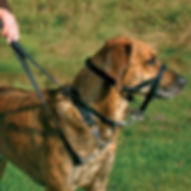 top_trainer-dog-harness2.jpg