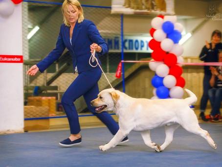 19.05.19 Omsk. International Dog Show - CACIB-FCI.