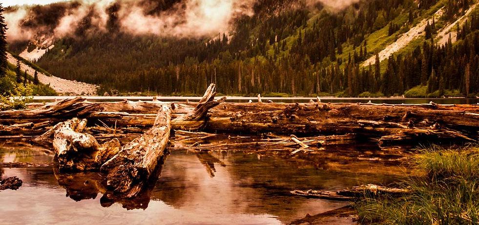 Driftwood along shore of mountain lake near Vancouver BC