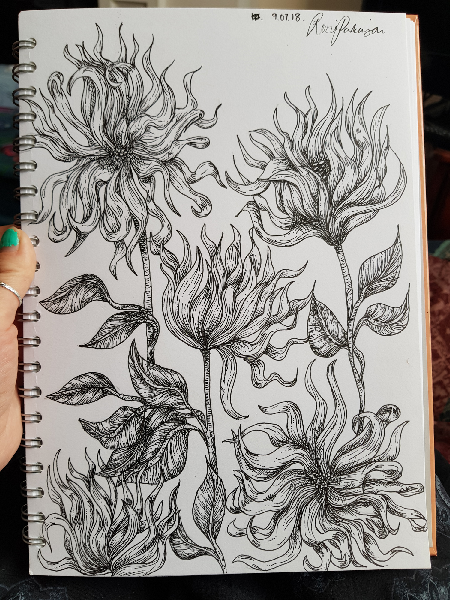 Dahlias Handdrawn