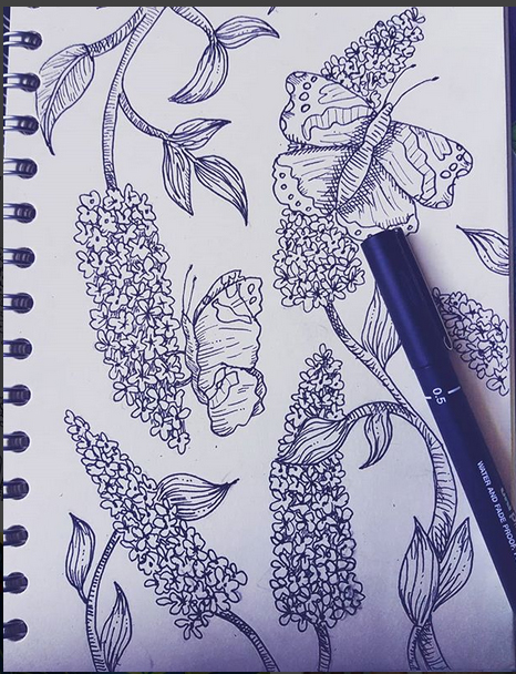 buddleia handdrawn