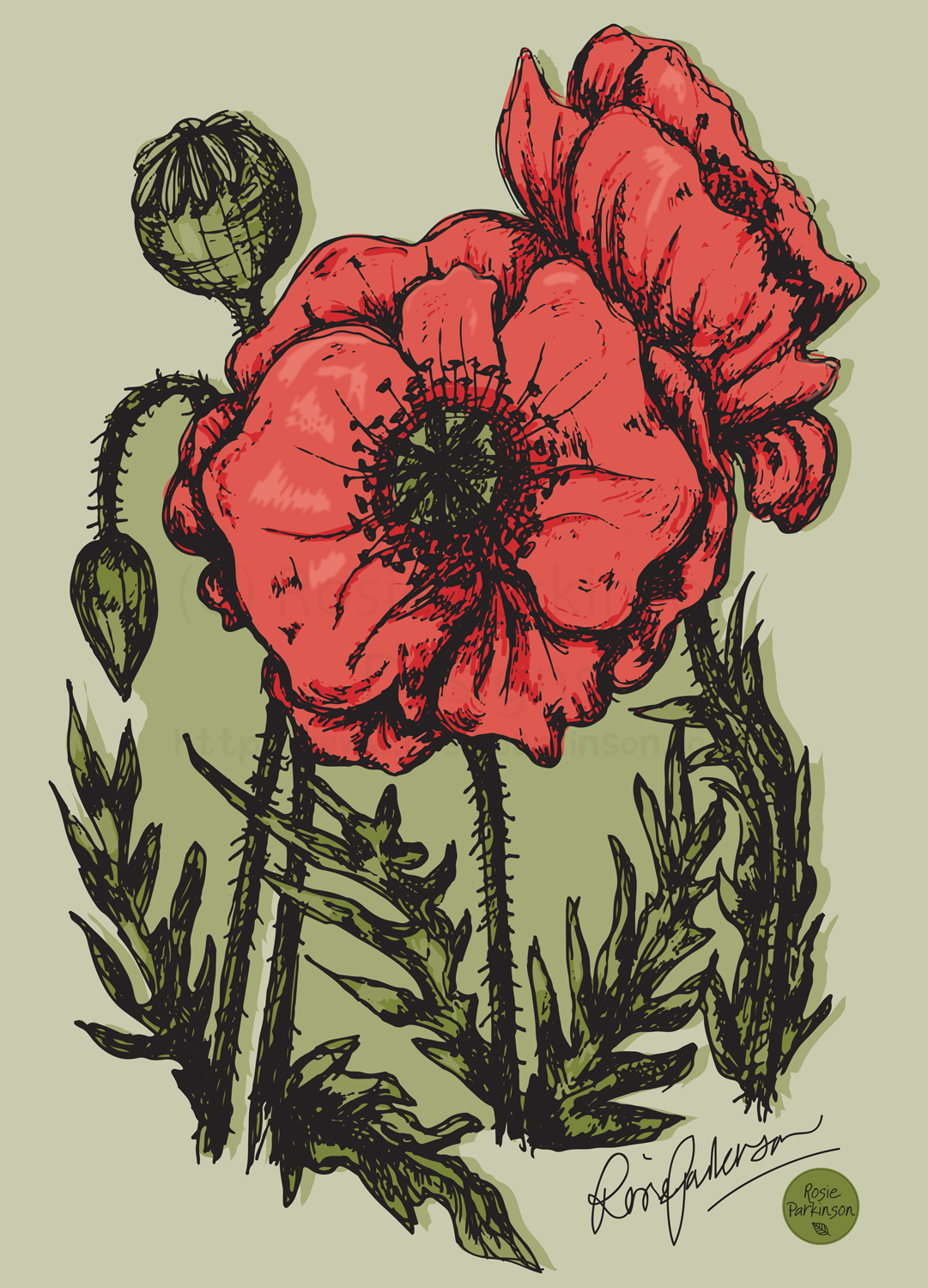 Poppies, Handdrawn.