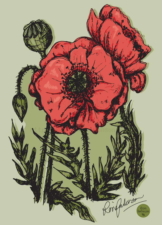 Poppies, Handdrawn.