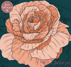 Rose 300620
