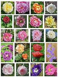 chipping campden flower montage_edited-1
