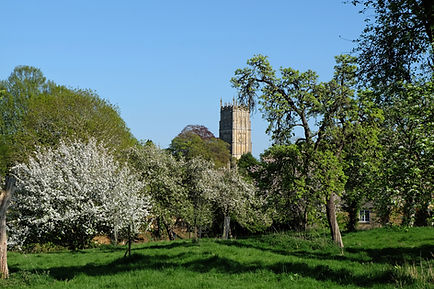Wolds End Orchard.jpg