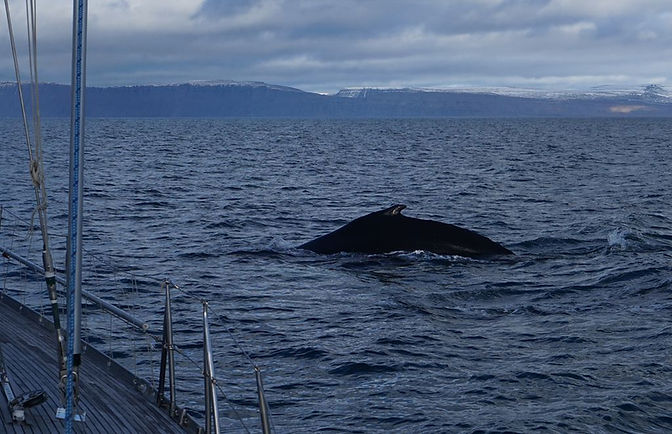 Dos baleine bateau_resultat.JPG