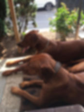 Dafina & Simba.JPG