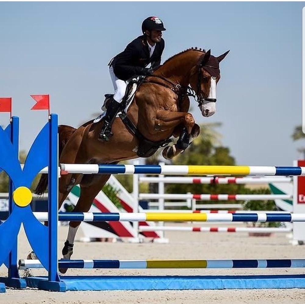 horse, chestnut horse, showjumping, showjumper