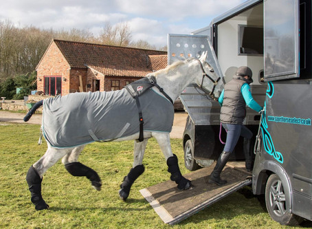 Take 5 Things- How to travel your horse safely