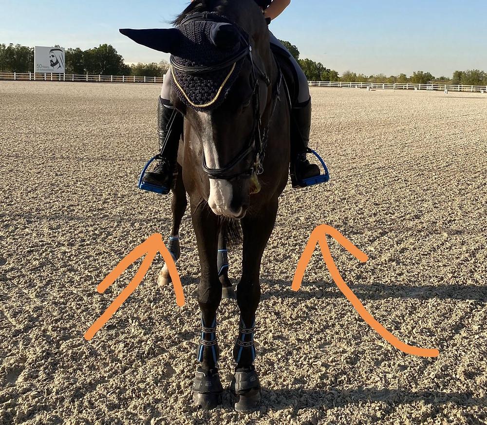 horse rider, stirrups, biomechanics, uneven stirrups