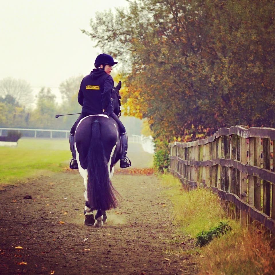 hacking, horse, horse riding