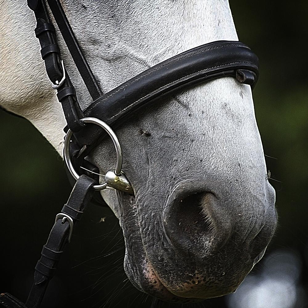 horse, bit, bridle, noseband, bit fitting
