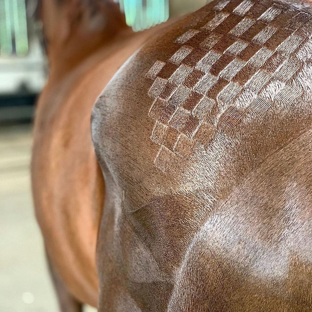 bay horse, horse turn out, showing, equine showing, show ring ready, professional groom, horse grooming, bay horse