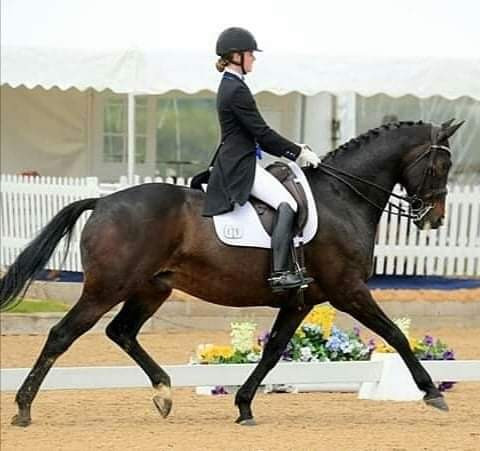dressage competition, neuromuscular therapy