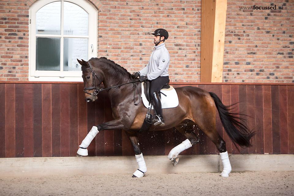 dressage horse, dressage rider, horse rider, spooky horse