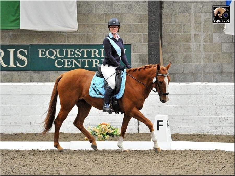 dressage, horse riding, dressage test, chestnut horse