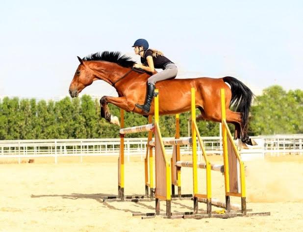 Horse jumping, bareback riding, bitless riding, barefoot horse, tackless horse