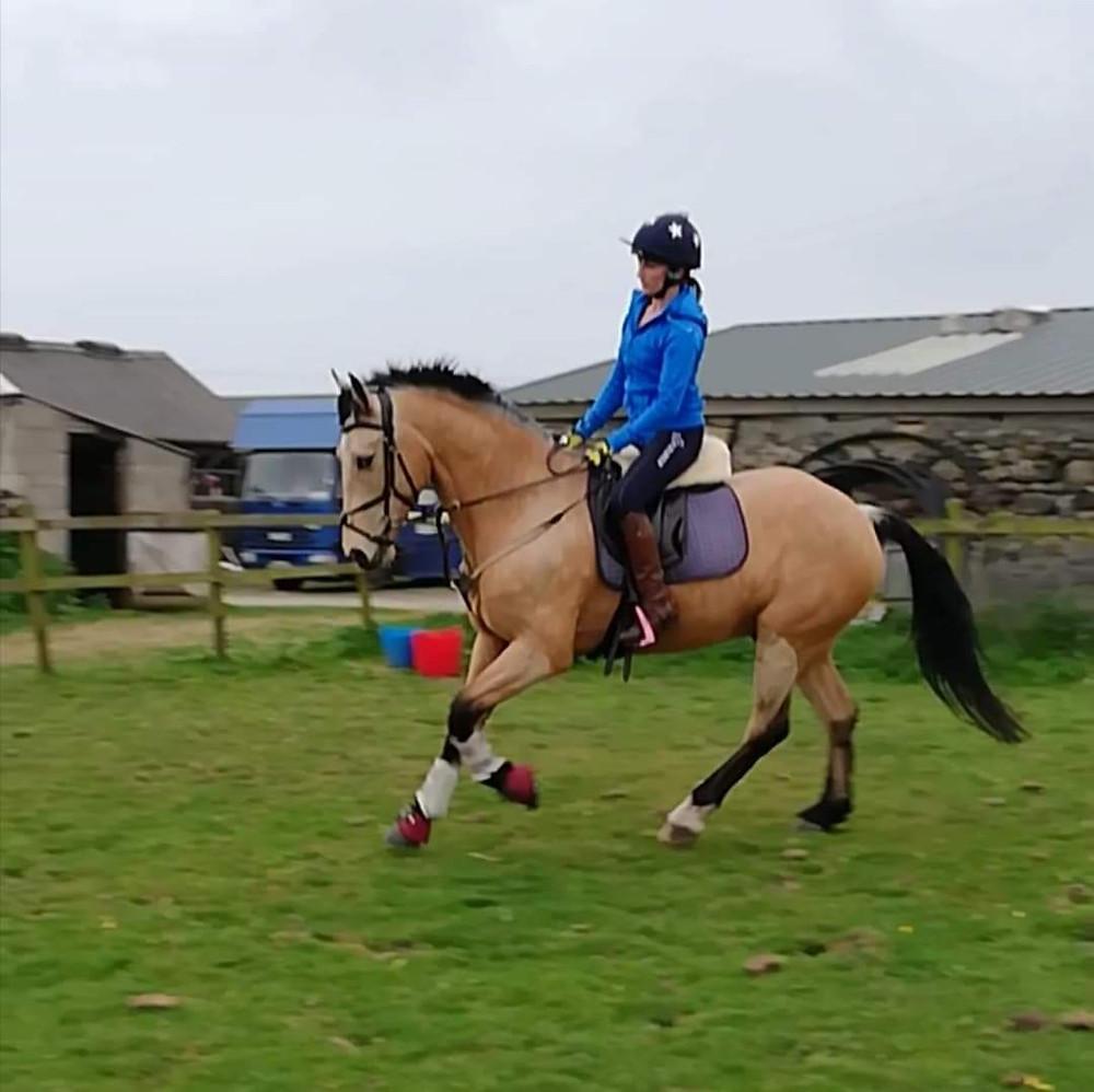 cantering, young horse, horses, dun horse