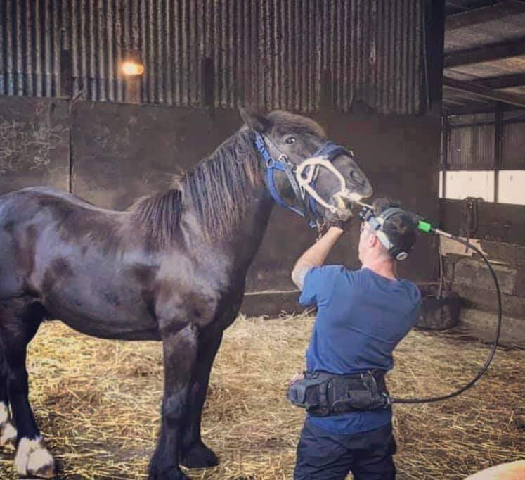 Equine dentist, Equine Dentistry, horse dentist, black horse, equine dental technician