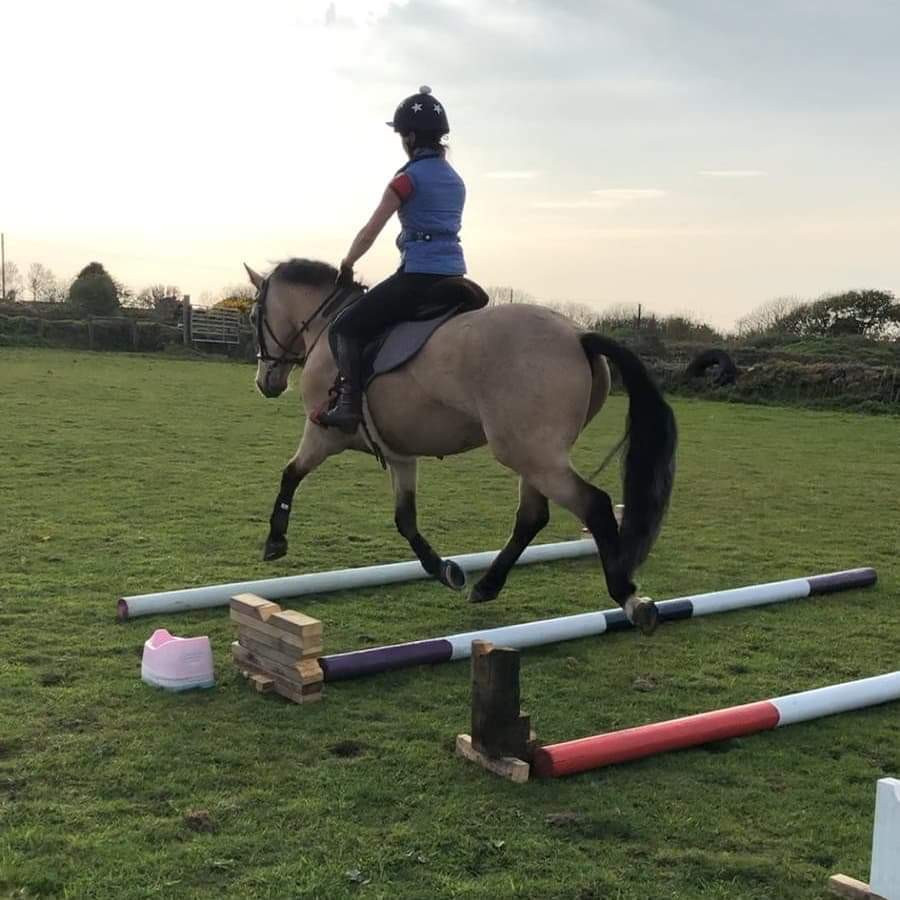 pole work, horses, horse poles, canter poles, trot pole, young horses