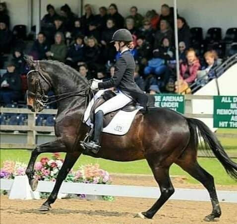 dressage horse, neuromuscular therapy, black horse