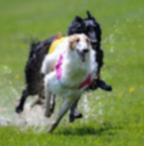 Pico coursing at National