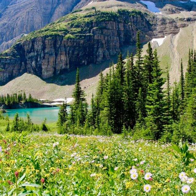 Alpine Flowers and Lakes