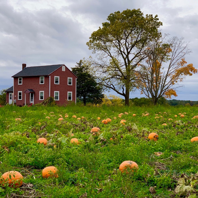 New England Pumpkin Patch