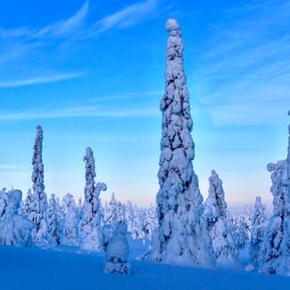 Frozen Hikes