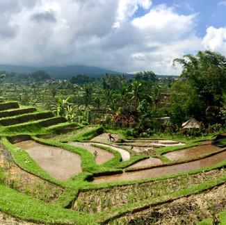 Tabanan Rice Terraces