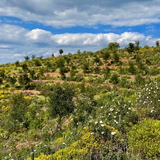 Wildflowers in Algarve