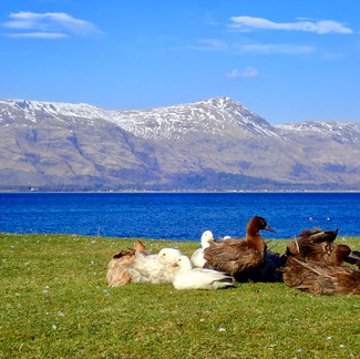 Relaxing By The Loch