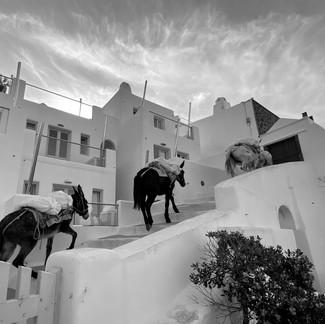Mules in Thera