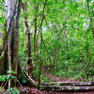Twisted Jungle