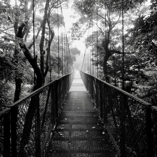 Venture Into the Canopy