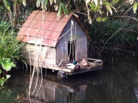 IMG_1731a - Ducks on duckhouse.JPG
