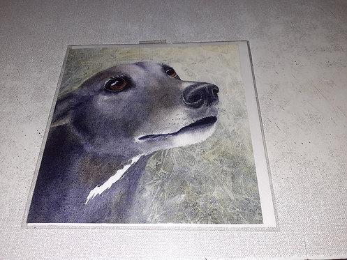 Pack Greyhound Cards