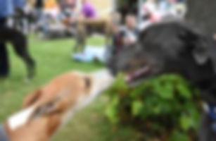greyhound who are we 1.jpg