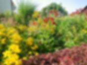 Mischpflanzungen