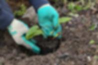 Nachhaltige Gartenpflege
