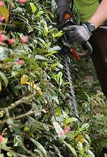 Gartenunterhalt steuerlich abziehbar