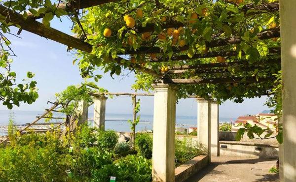giardino-della-minerva-a-salerno.jpg