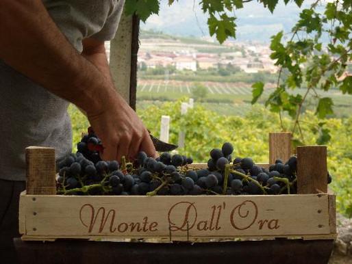 Handmade in Monte dall'Ora