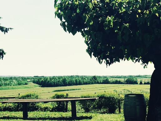Roncada: the Kingdom of Nature, Women and Children